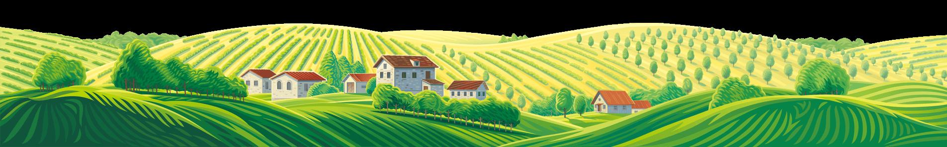 ワイン畑の絵